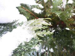 Pierwsze oznaki zimy P.Sieradzka Postomino.jpg