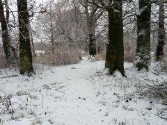 Zimowy las A. Czapla Postomino.jpg