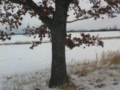 Zimowy sen A. Czapla Postomino.jpg