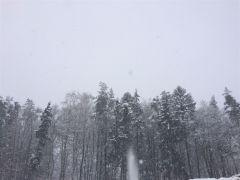 Śnieżny las D. Wawrzyniak Postomino.JPG