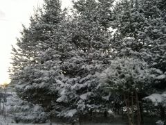 Zimowe okrycie J. Spocińska Postomino.jpg