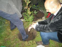 Drzewo dziedzictwa (13).JPG