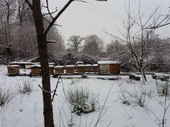 Zimowa przerwa pomocnych pszczół A. Czapla Postomino.jpg